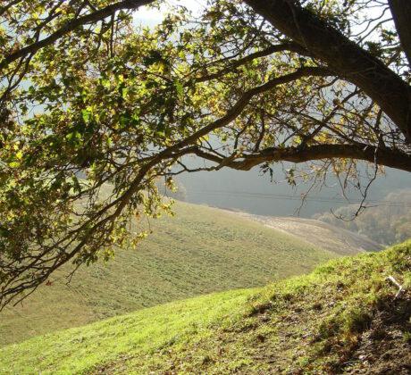 Medio ambiente - Gestión y conservación de recursos naturales